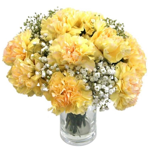 Blooming Carnations with Love and Affection<br><br><br>